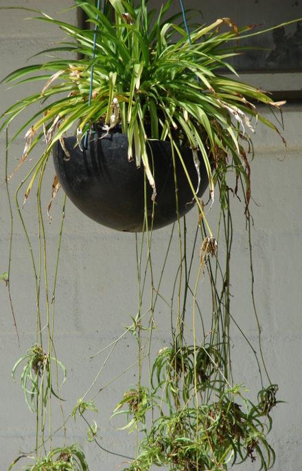 Plantas de oficina estas son las mejores rent profit for Plantas para oficina