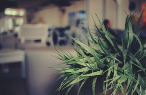 plantas para oficina escritorio