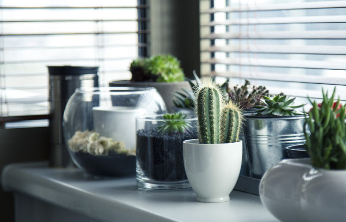 Plantas de Oficina – Estas son las Mejores